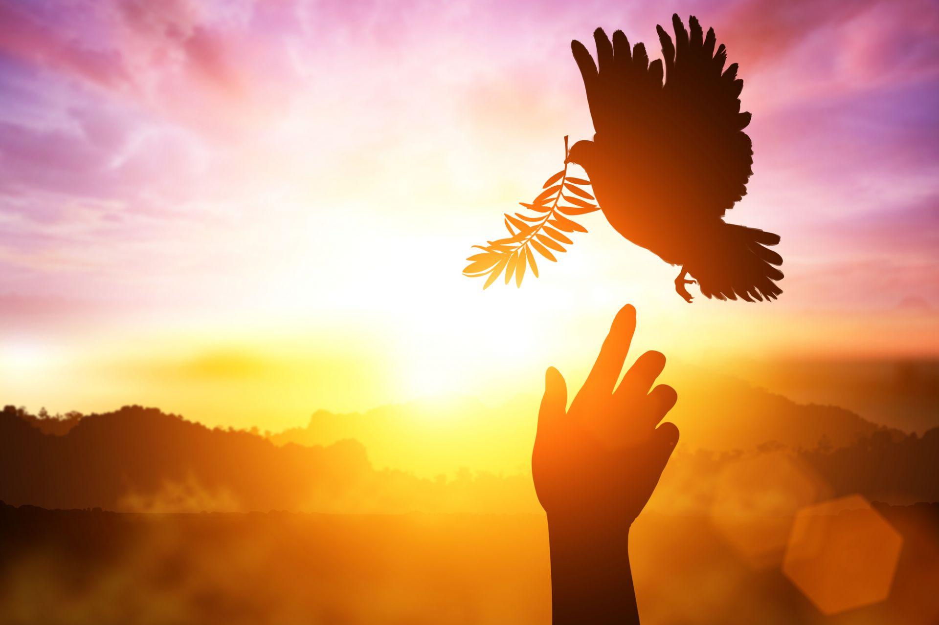 Coronavírus. Dom Hiiboro: 'Deus transforma os sofrimentos e cura'